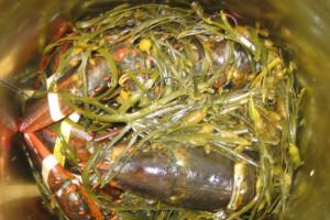 langoustines-court-bouillon-algues