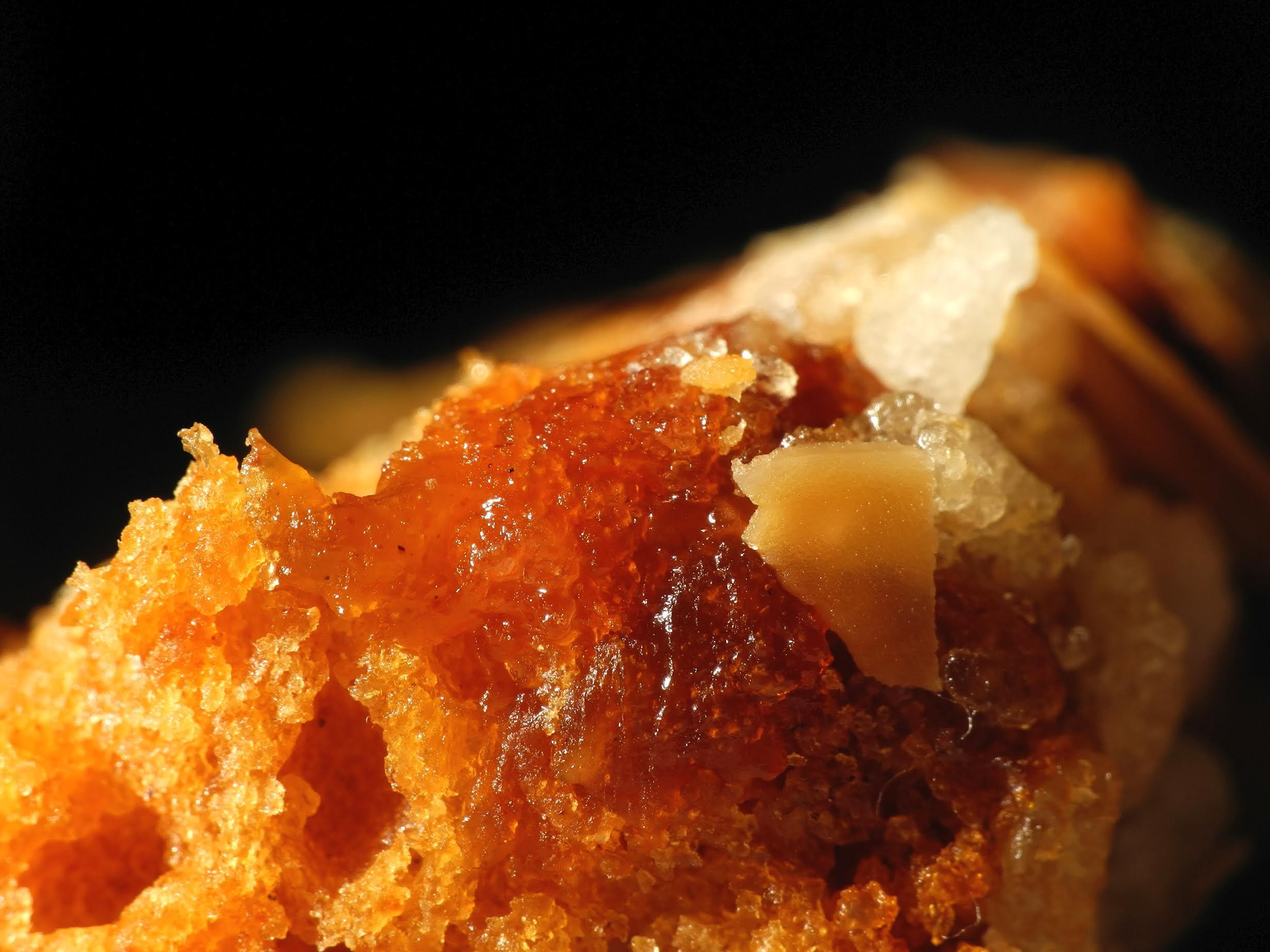 Pain d'épices.Image prise avec la bonnette Raynox DCR-250.